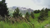 Beautiful long grass swaying in the wind on the hillside Stock Footage