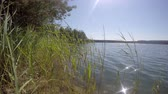 Grass sways in the wind on a blue lake in forest outdoor Stock Footage