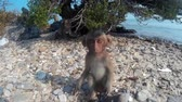 fascicularis : Baby monkey looks at the camera and climbs a tree