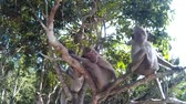 simio : many monkeys are on a tree and looking at the camera