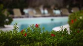 patio : Luxury resort swimming pool garden in Mexico Stock Footage