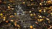 kasım : Water trickles over a rocky surface strewn with colorful fall leaves in this seamlessly looping video.