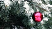 Red Christmas ball hanging on blue spruce branch in snowy weather outdoor Стоковые видеозаписи