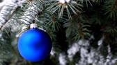 Blue Christmas ball hanging on blue spruce branch