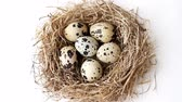 Quail eggs in nest from straw for Easter Стоковые видеозаписи