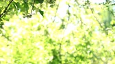 Trees with bokeh light background in bright summer day, use for background Стоковые видеозаписи