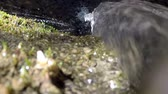 orvalho : A close up view of moss with a small waterfall