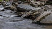 dumanlı : Time Lapse Creek Flows in the Great Smoky Mountains in early spring Stok Video