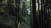 filmen : Rain Drops Fall Through The Forest in the Pacific Northwest
