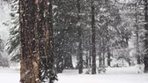 Snow Flakes Fall in Forest at Quarter Speed