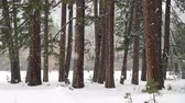 Snowfall At The Edge of Forest in Yosemite Valley