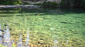 yellowstone : Trout Break The Surface of Clear Lake in Washington Mountains