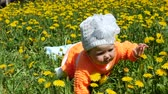 on all fours : Happy child in a spring glade in dandelions with his family.