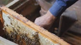 медовый : Working bees work honeycomb with honey. beekeeper pulls out the frame with honey. beekeeper gets a frame with honey. fumigation machine for bees, smoke Стоковые видеозаписи