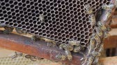 petek : Working bees work honeycomb with honey.