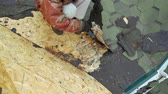 dekarz : Repair of the roof of a residential building. Dismantling soft tile. Rotten chipboard plate on the roof of the house.