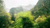 ég : rainy calm nature scene of forest landscape in mountains, spring in mountains, beautiful nature, relax nature scene