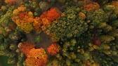 yaprak döken : Top down flying above colorful autumn forest. Stok Video