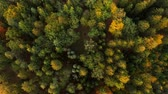 Top down flying above colorful autumn forest. Stok Video