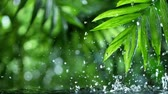 fresh green leaves with water drops over the water , relaxation with water ripple drops concept , slow motion