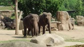 A small herd of Asian Elephants