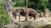 A small herd of Asian Elephants walking by a small waterfall Dostupné videozáznamy