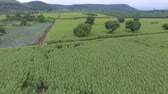 fazenda : aerial view of sunflower field in rural agricultural meadow