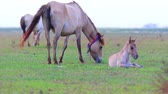 mama : flock of horse on rural field