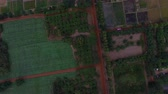 rostlina : aerial view of agriculture field