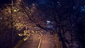 Tokyo, Japan-mrch 31, 2019: Cherry blossoms along a street in Tokyo after the rain Vídeos