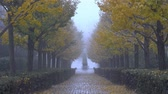 orzechy : Tokyo,Japan-November 25, 2019: Foggy Gingko trees along a lane in early winter