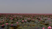 tekne : Udon Thani,Thailand-January 22, 2020: Boats on Red Lotus Lake or Talay Bua Daeng in Udon Thani, Thailand