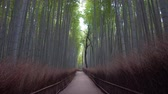 Kyoto,Japan-February 26, 2020: Bamboo grove path in the winter morning in Arashiyama, Kyoto Стоковые видеозаписи