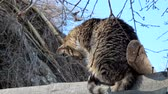 cold winter : Tabby cat sits on the roof of a barn