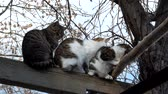 amontoado : Homeless cats warmed huddled to each other Vídeos