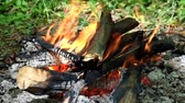 лизать : Bonfire in the forest. Fire tongues eat firewood