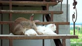 cins : Loving rabbit and a white cat on the steps Stok Video
