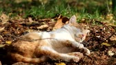Red cat dozing on dry land