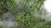 zbytek : Spring drops on background of green grass and snow residue
