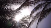 cena não urbana : Leaves from a palm tree to sway in the wind a bright light from the sun shines. Close up Vídeos