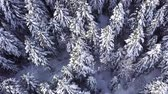 air shooting : Coniferous forest. View from above . Aerial view Stock Footage