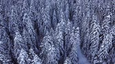 dimensão : Pine trees covered with snow with a copter. View from above. Aerial view Stock Footage