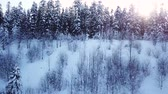 air shooting : Coniferous forest at sunset. Aerial view Stock Footage