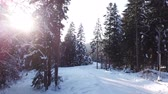 размеры : Pine winter forest. Aerial view