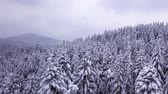 air shooting : Winter coniferous forest . View from above . Aerial view Stock Footage