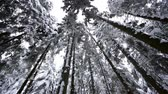 dimensões : Winter forest . Dolly shot. Slow motion