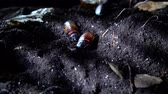 bruto : Madagascar hissing cockroach in the night forest. Halloween background Stock Footage