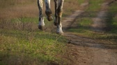 amazona : Horse hooves galloping across a green field. Slow motion. Close up