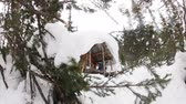 House wooden chalet in the winter in the snow around the tree, video slider