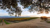 boerenland : 4K timelapse van Salinas Valley, zon stijging, California Stockvideo